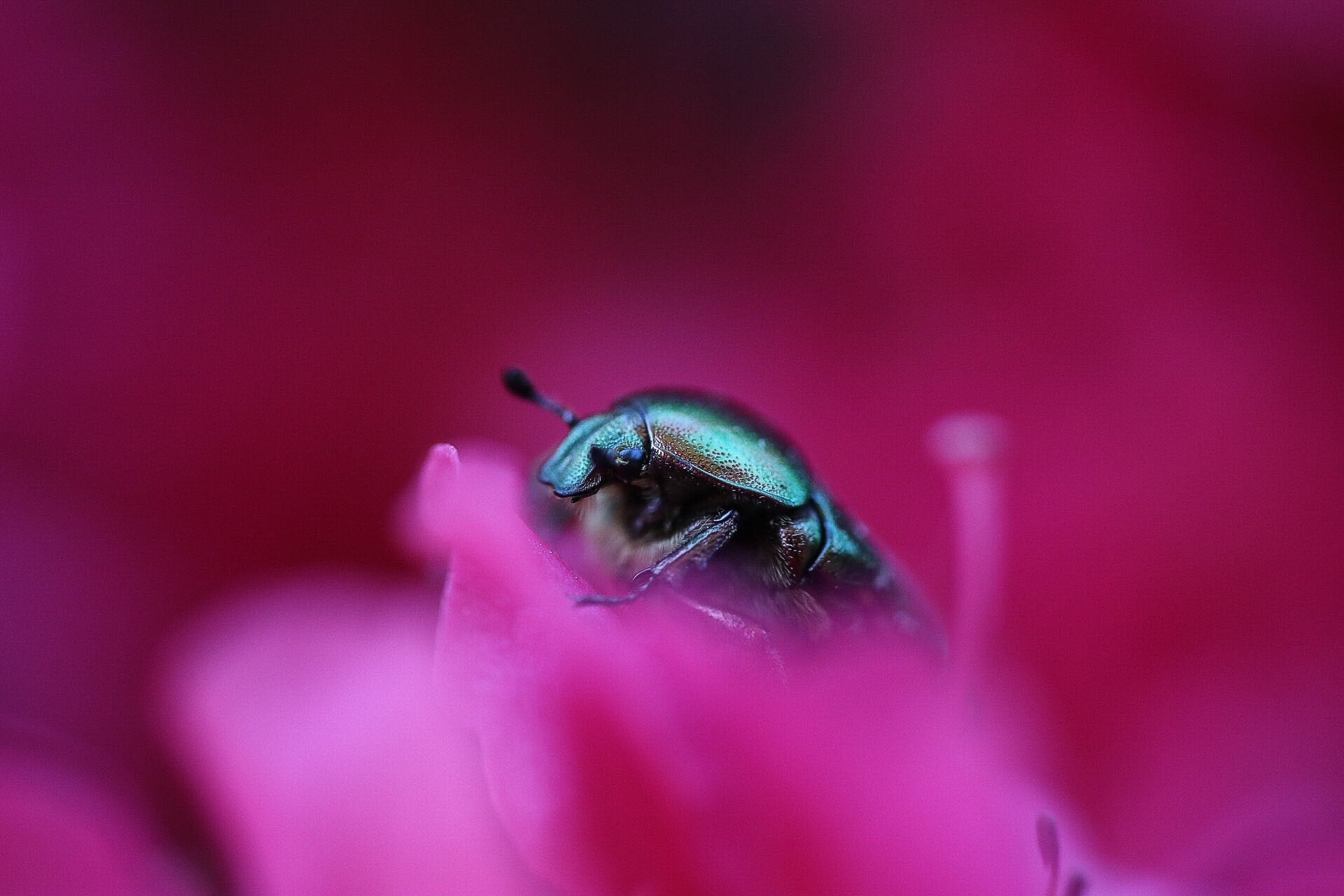 Insekten – Makroaufnahmen