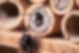 Junge Mauerbienen schlüpfen aus dem Bambusröhrchen