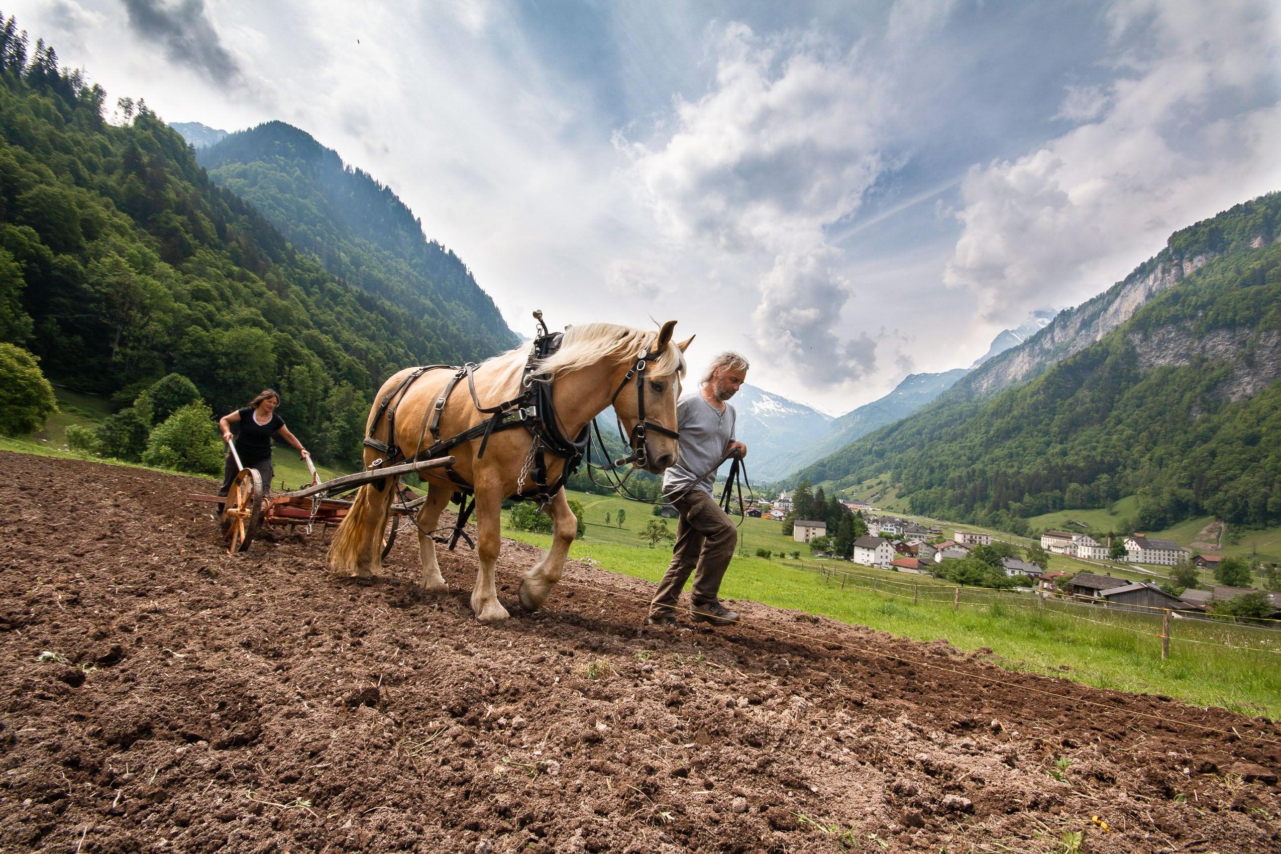 Bauern beim Pflügen mit dem Pferd