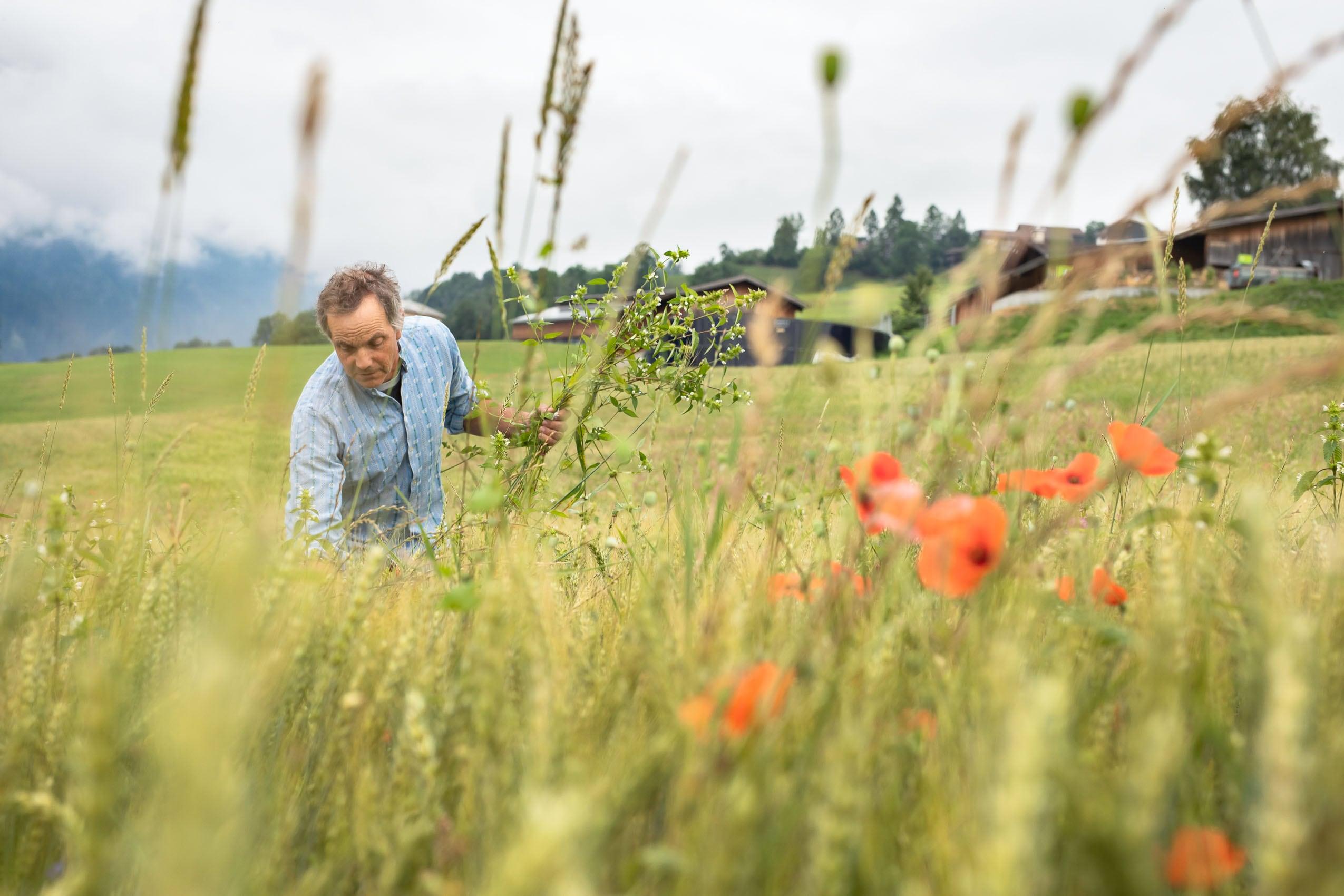 Bio-Bauer im Weizenfeld