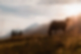 Pferd in der Morgensonne